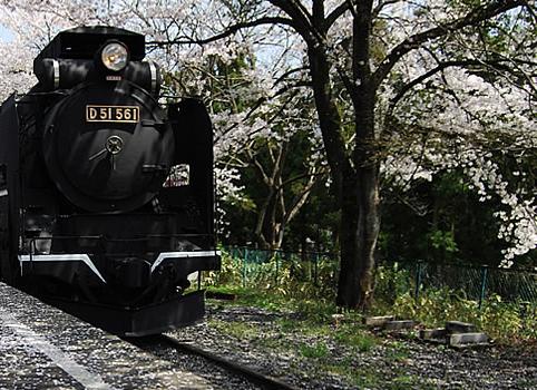SL「D51-561」とさくら,群馬県,道の駅,