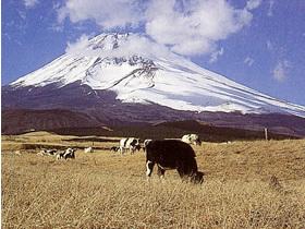 忠ちゃん牧場,体験,観光,牧場