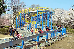 こどもの国、滑り台と桜,神奈川,花見,名所