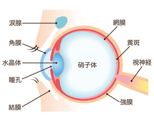 目の構造,視力,低下,
