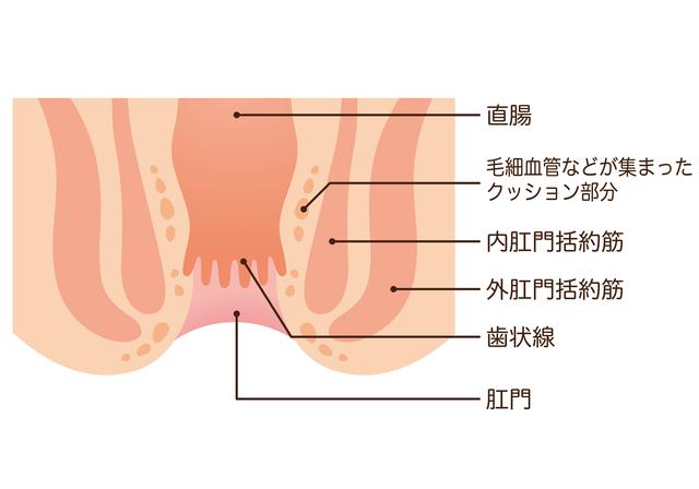 部位の説明,産後,痔,