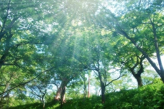 木々の写真,妊娠,危険日,