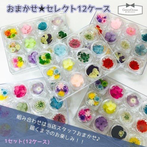GreenOcean おまかせ12種(^^) お花いっぱい 押し花・ドライフラワーセット,イヤリング,作り方,