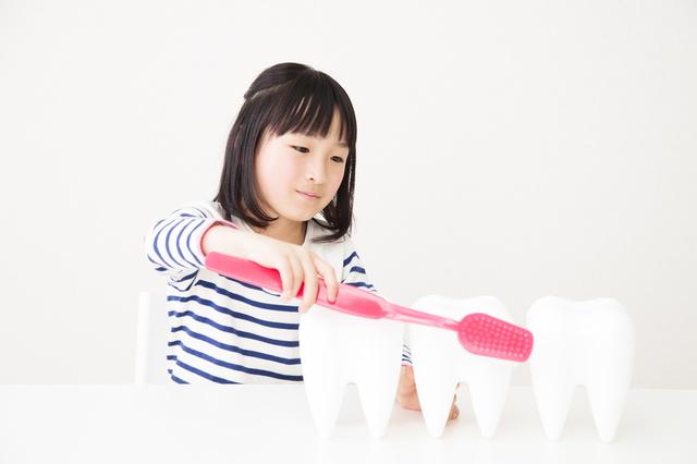 永久歯の磨き方のポイント,乳歯,永久歯,磨き方