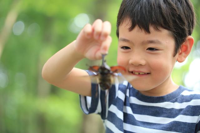 自由研究でカブトムシを見る男の子,幼児,自由研究,