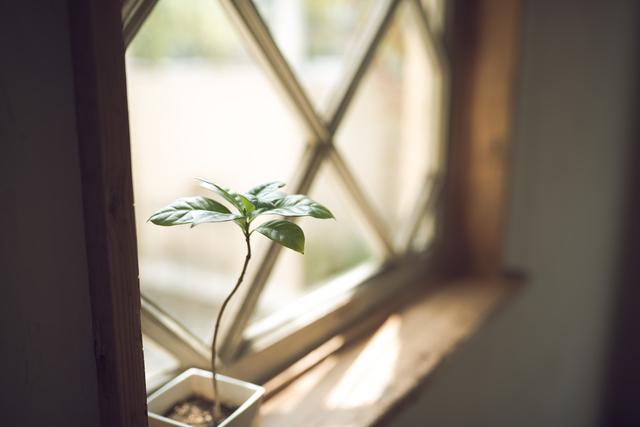 窓辺,妊娠22週,胎児,