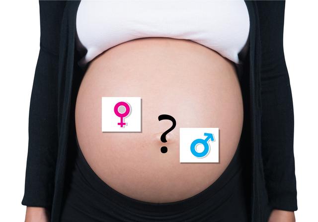 妊婦おなか,妊娠,24週,胎児