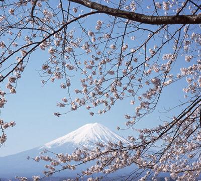 富士山と桜,河口湖,キャンプ場,コテージ