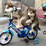自転車教室
