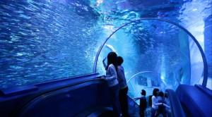 八景島シーパラダイス 子連れ 水族館
