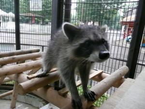 平塚総合公園の動物園の動物の画像