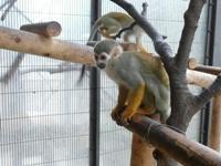 子連れで行く平塚総合公園の動物園のリスザルの画像