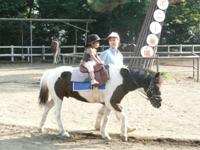 平塚総合公園の動物園で子連れによる乗馬を行う画像