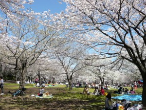 子連れで行く平塚総合公園の平塚のはらっぱでイベント