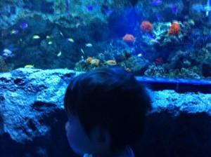 水族館で夢中になって魚をみつめる子供