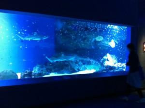 サメが泳ぎまわる水槽