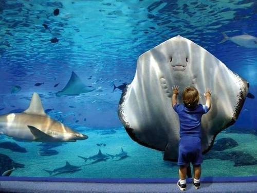 雨の日に品川水族館エプソンスタジアムに子連れおでかけ