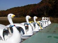 東京ドイツ村のスワンボート