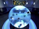 simg_jellyfish06