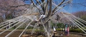 ふなばしアンデルセン公園のジム