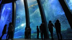 アクアミュージアム 八景島シーパラダイス 水族館 神奈川