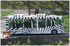 多摩動物公園のライオンバス