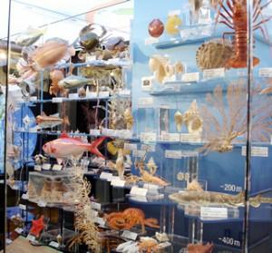 日本の海洋生物