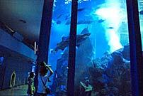 ナイトアクアリウムが静岡の水族館で鑑賞できる画像01