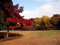 子連れで行きたい紅葉の穴場スポット東京・砧公園の画像