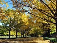 子連れで行きたい紅葉の穴場スポット東京・昭和記念公園の画像
