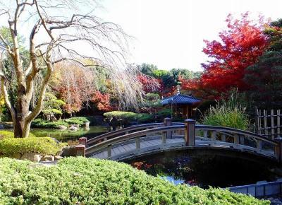 紅葉を見れる神奈川・平塚市総合公園の庭園の画像