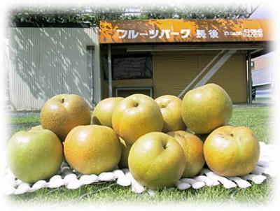 神奈川の梨の画像