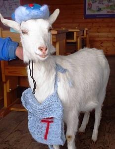 まかいの牧場白ヤギの画像