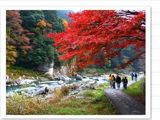 子連れで行きたい紅葉の穴場スポット埼玉・御岳渓谷の画像