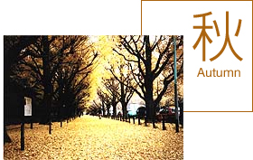 子連れで行きたい紅葉の穴場スポット東京・神宮外苑いちょう並木の画像