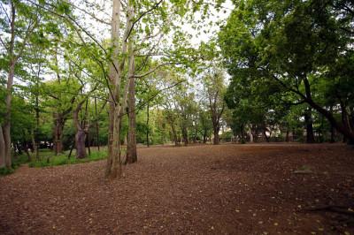 林試の森公園のどんぐりで遊びを楽しむ園内画像
