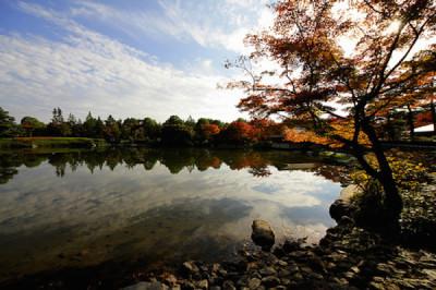 国営昭和記念公園のどんぐりで遊びを楽しむ園内画像