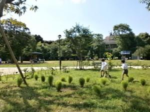 白金台どんぐり児童遊園のどんぐりで遊びを楽しむ園内画像