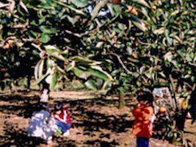果物狩りができる関東の福田グリーン農園の画像
