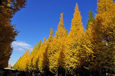 紅葉スポットの関東・東京神宮外苑のイベントの画像