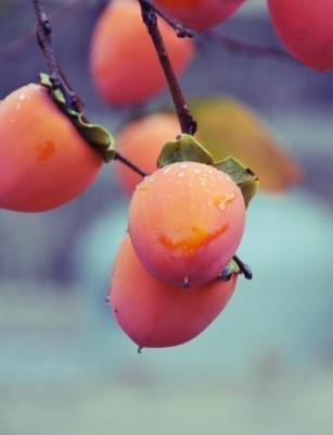果物狩りにおすすめな関東神奈川県にある果樹園の画像02