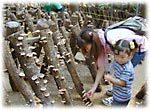 小松沢レジャー農園で秋の味覚を味わう子どもたちの画像