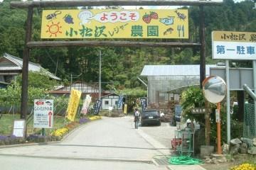 果物狩りができる関東の小松沢レジャー農園の画像