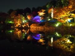 紅葉スポットの関東・東京目白のライトアップイベントの画像