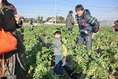 果物狩りもできる関東の農園で大根の収穫体験をしている親子の画像