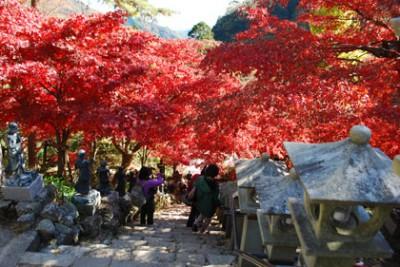 紅葉のスポットの大山寺昼紅葉の画像
