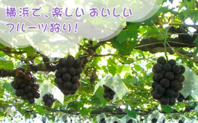 芝口果樹園で秋の味覚を味わえるイメージ画像