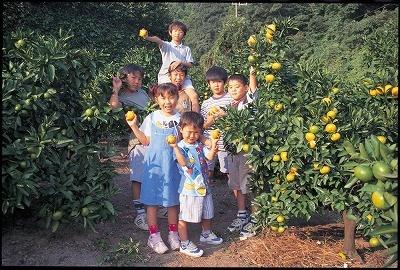 果物狩りができる関東の果樹園でみかん狩りを楽しむ家族の画像