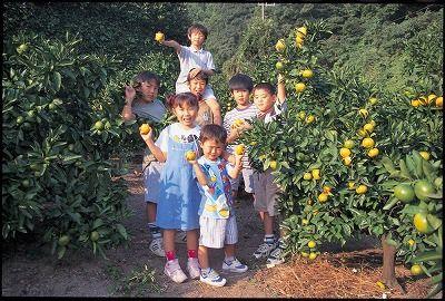 みかん狩りができる神奈川津久井浜観光農園の画像