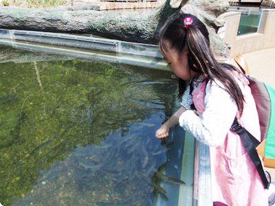 子どもに人気でも穴場な相模原ふれあい科学館で魚に餌付けの画像